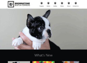Brownstonebostonterriers.com thumbnail