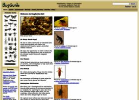 Bugguide.net thumbnail