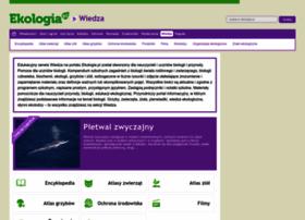 Ekofora.pl thumbnail
