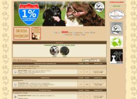 Labradory.org thumbnail