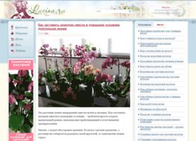 Lucina.ru thumbnail