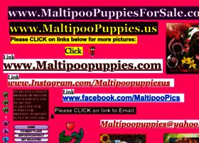 Maltipoopuppies.us thumbnail