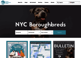 Nycacc.org thumbnail