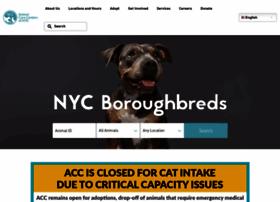 Nycacc.org thumbnail