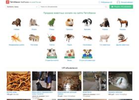 Petsfunny.ru thumbnail