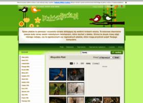 Ptaki-zdjecia.pl thumbnail