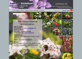 Seidelbast.net thumbnail