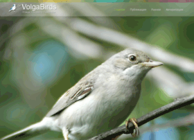 Volgabirds.ru thumbnail