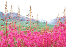Wildrootbotanicals.com thumbnail