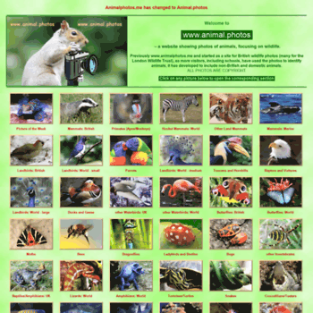 Animal.photos thumbnail