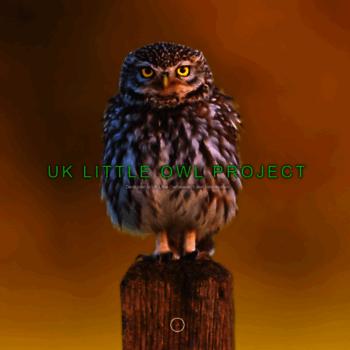 Littleowlproject.uk thumbnail