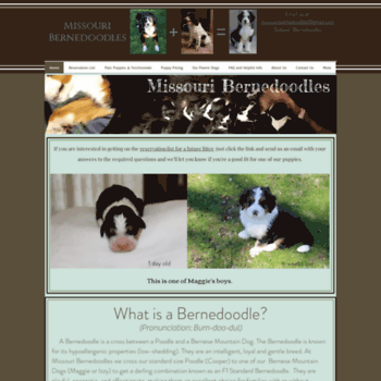 Missouribernedoodlescom At Wi Bernedoodle Puppies For Sale