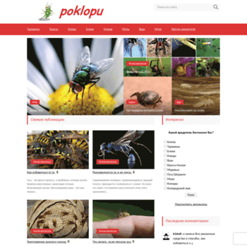 Poklopu.ru thumbnail