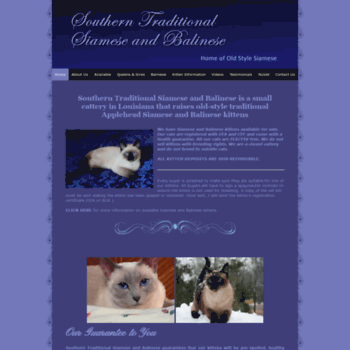 Southerntraditionalsiamese Com At Wi Traditional Siamese