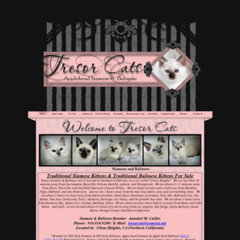 Tresorsiamesecats Com At Wi Traditional Siamese Kittens For